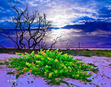 Wild Grape Vine-Sunset Sun Rays-Blue Cloud Sky by Eszra Tanner