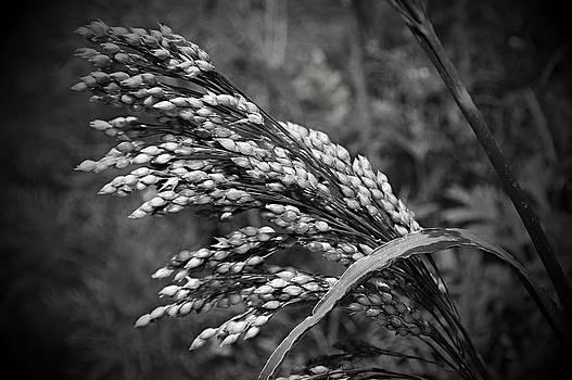 Cindy Nunn - Wild Grass