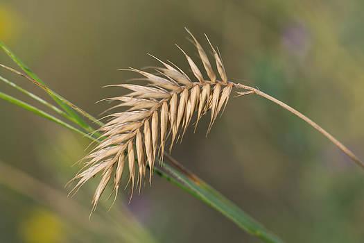 Dwayne Schnell - Wild Grass