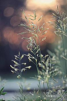 Wild Grass by Lauren Maki