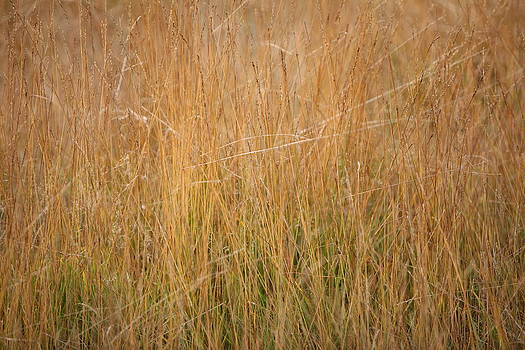 Mark Severn - wild grasses