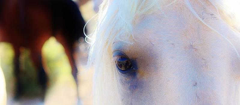 Wild Horse 4 by Wynema Ranch