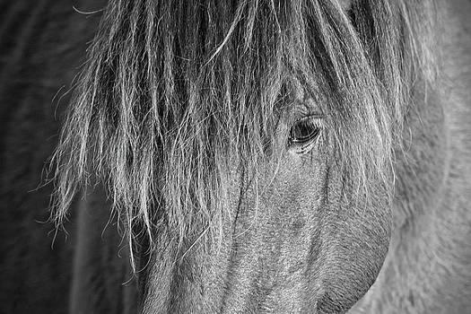 Wild Horse Close-up in Black and White by Bob Decker
