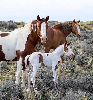 Nadja Rider - Wild Horse Family Portrait