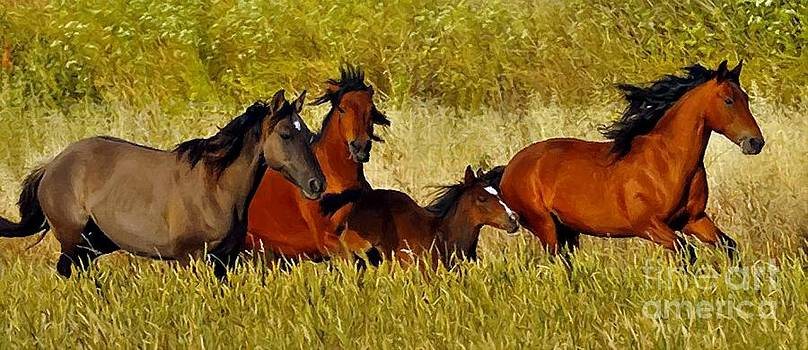 Wild Horse by Larry Stolle
