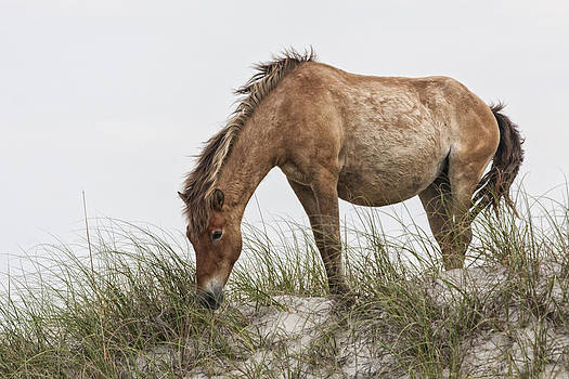 Wild Horse Mare on Sand Dune by Bob Decker