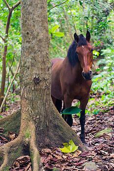 Wild Horse by Peter Verdnik