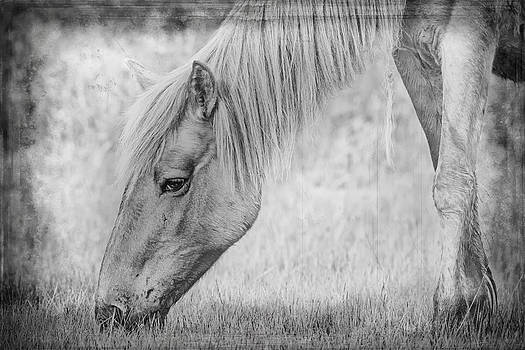 Wild Horse Tintype Digital Art by Bob Decker