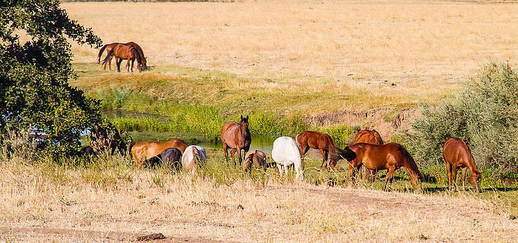 Wild Horses feeding by Brian Williamson
