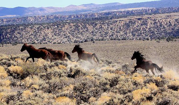 Wild Horses I by Ron  Romanosky