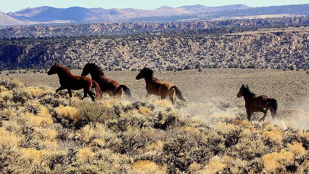Wild Horses II by Ron  Romanosky