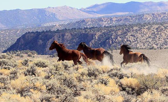Wild Horses III by Ron  Romanosky