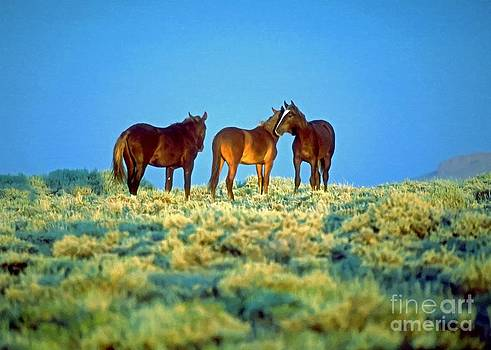 Wild Horses by Larry Stolle
