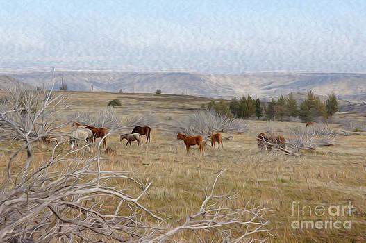 Wild Horses by Nur Roy