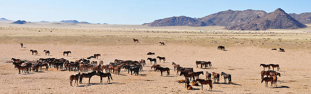 Wild horses of the namib panorama by Grobler Du Preez