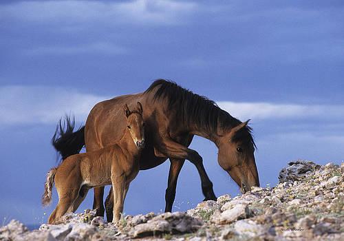 Scott Wheeler - Wild Mare and Foal