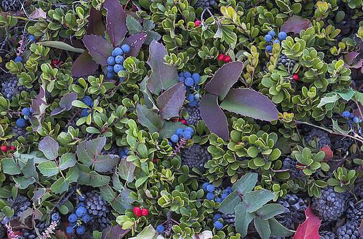 Scott Wheeler - Wild Mountain Berries
