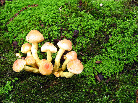 Wild Mushrooms by Vijinder Singh