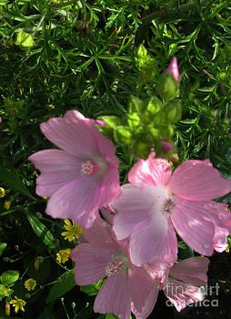 Ellen Miffitt - Wild Pink Geraniums