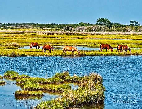 Wild Ponies of Assateague  by SCB Captures