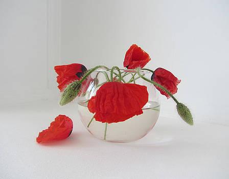 Wild Poppies by Natalia Levis-Fox