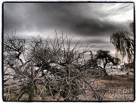 Wild Shore by Victoria Herrera