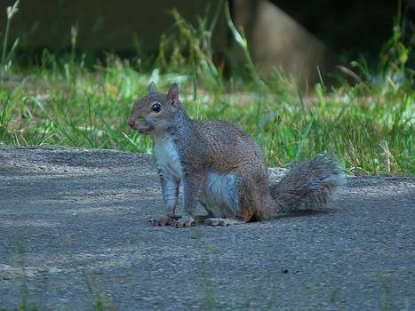 Wild Squirrel by Kathy Long
