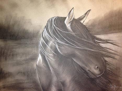 Wild Stallion by Josh Rasmussen