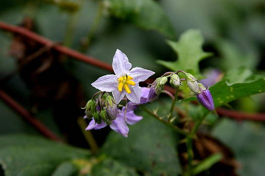 Wild Thistle Flowers by Paula Tohline Calhoun