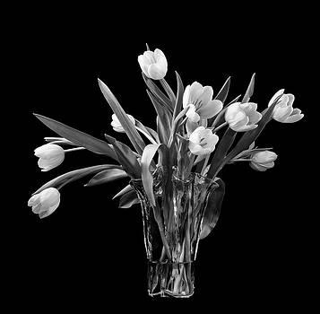 Wild Tulips by Georgette Grossman