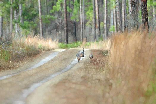 Wild Turkeys by Bob Richter