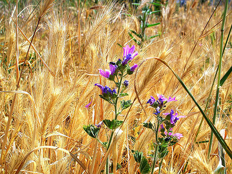 Rick Todaro - Wild Wheat and Wildflowers