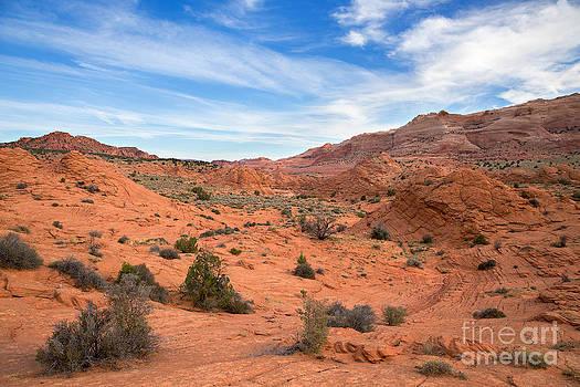 Wild Wild West by Shishir Sathe