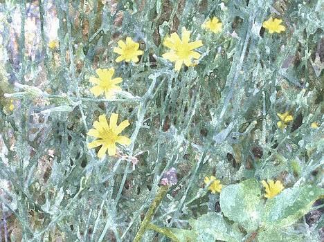 Rosemarie E Seppala - Wild Yellow Daisys