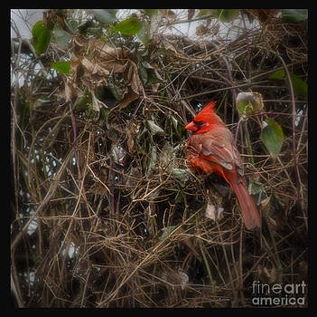 Wildbird in Red by Tamera James