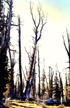 Wilderness Trees by Kevin Heaney