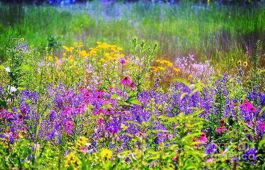 Wildflower Beauty  by Peggy Franz