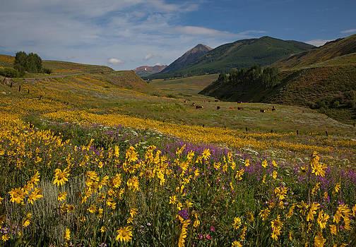Susan Rovira - Wildflower Capital of Colorado
