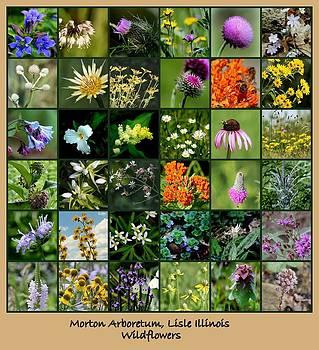 Rosanne Jordan - Wildflower collage