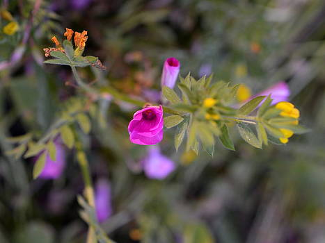 Bishopston Fine Art - Wildflower Dream