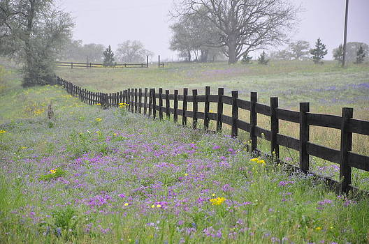 Wildflower Fenceline by Cherie Haines