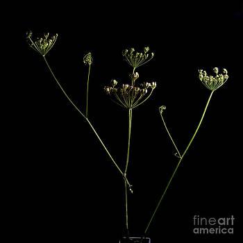 BERNARD JAUBERT - Wildflower. France.