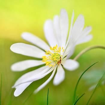 Wildflower by Gynt