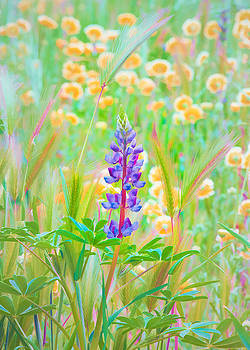 Wildflower Meadow - Spring in Central California by Ram Vasudev