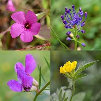 Bishopston Fine Art - Wildflower Quartet