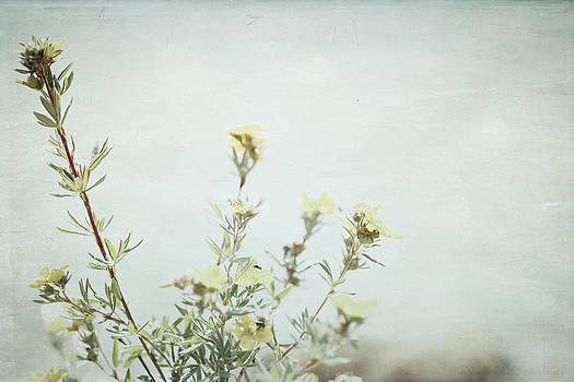Wildflowers - Lake Louise by Lisa Parrish
