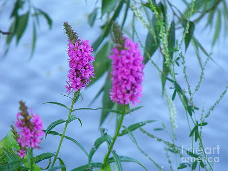 Wildflowers 1 by Leslie Jennings