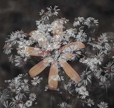 Wildflowers-1 by Minartesia