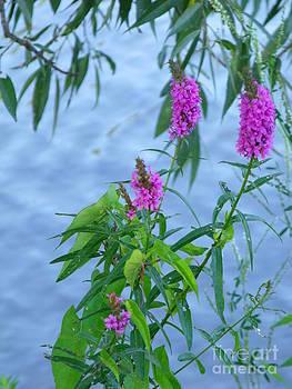 Wildflowers 2 by Leslie Jennings