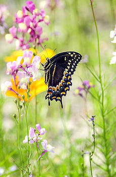 Wildflowers and butterfly by Bill LITTELL